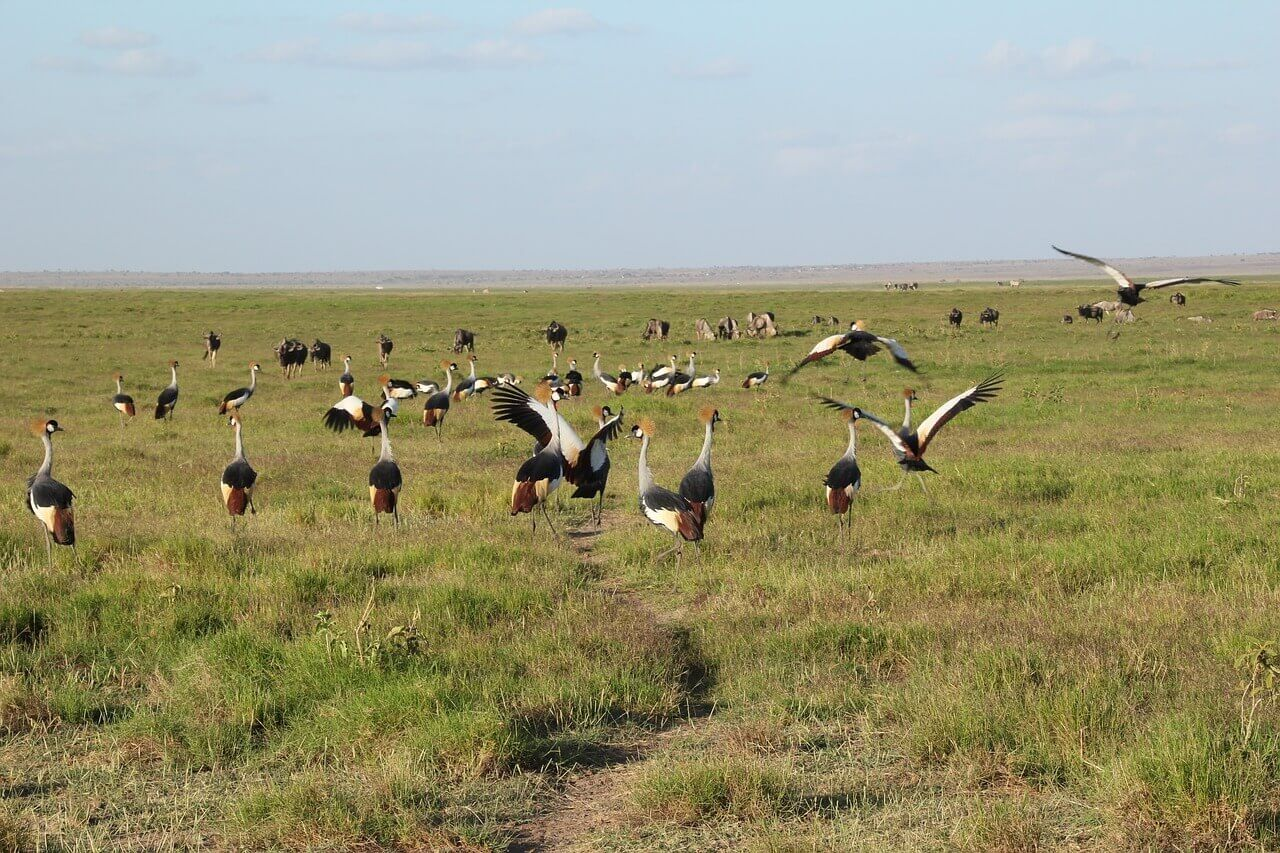 Birds at the Amboseli National Park