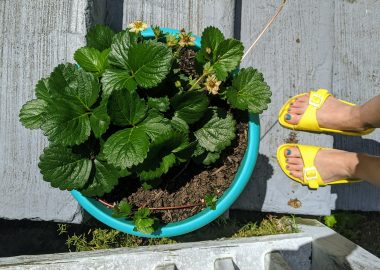 yellow sandals near plant