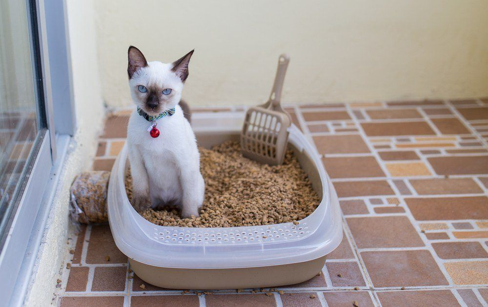 best vacuums for cat litter