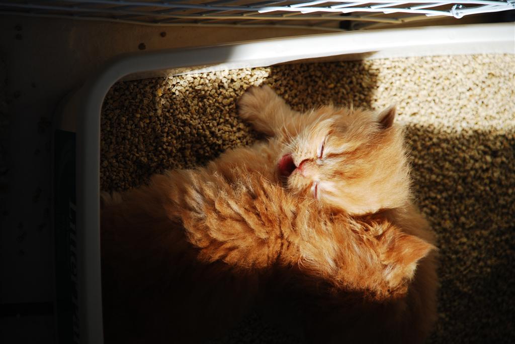 tidy cat breeze reviews