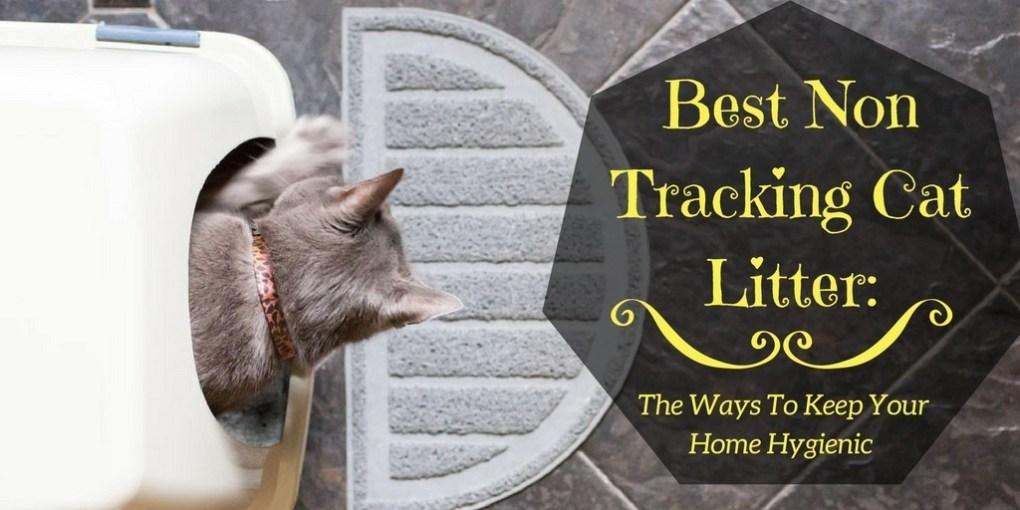 Best non tracking cat litter