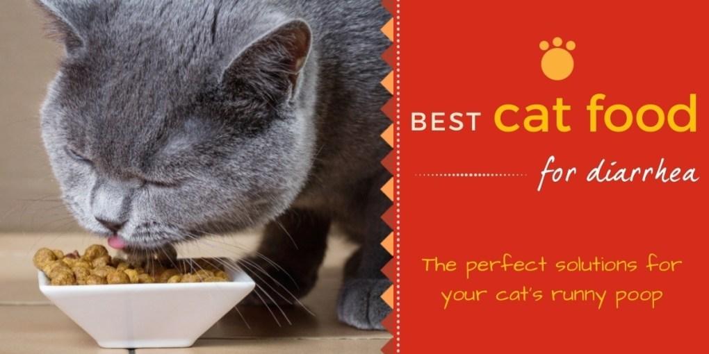 Best cat food for diarrhea