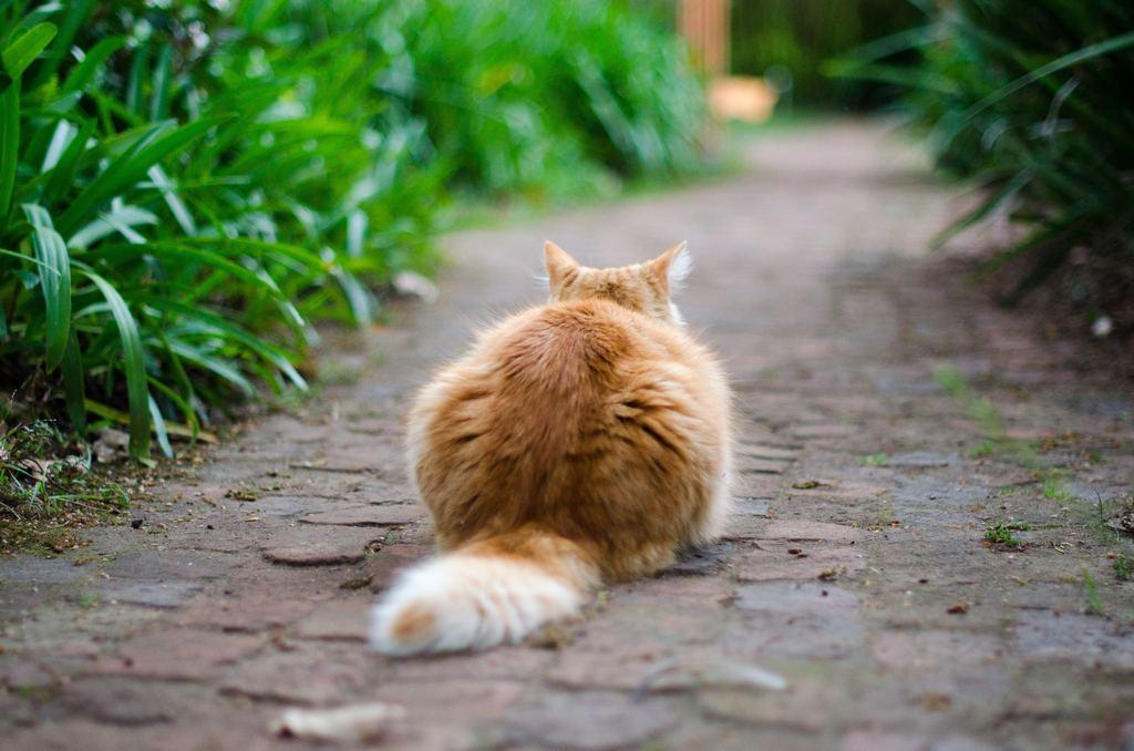best cat food for smelly poop