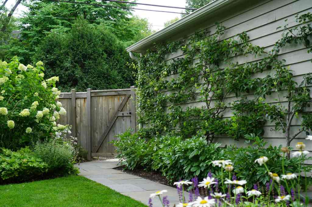 Here She Grows Diy Espalier For Small Space Gardeners