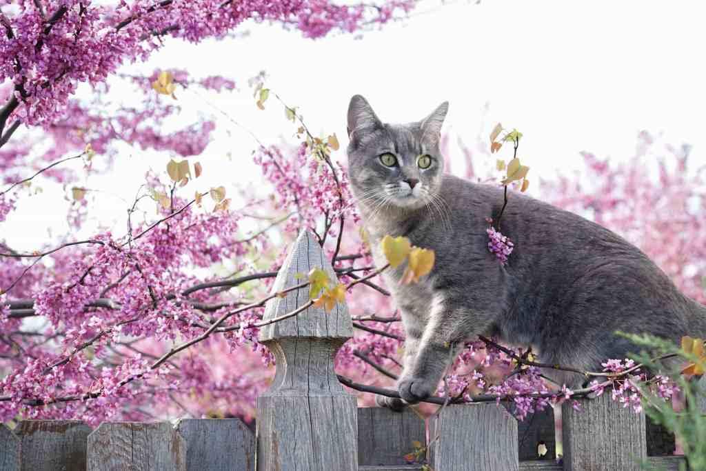 Grateful Gardener Cat on Fence