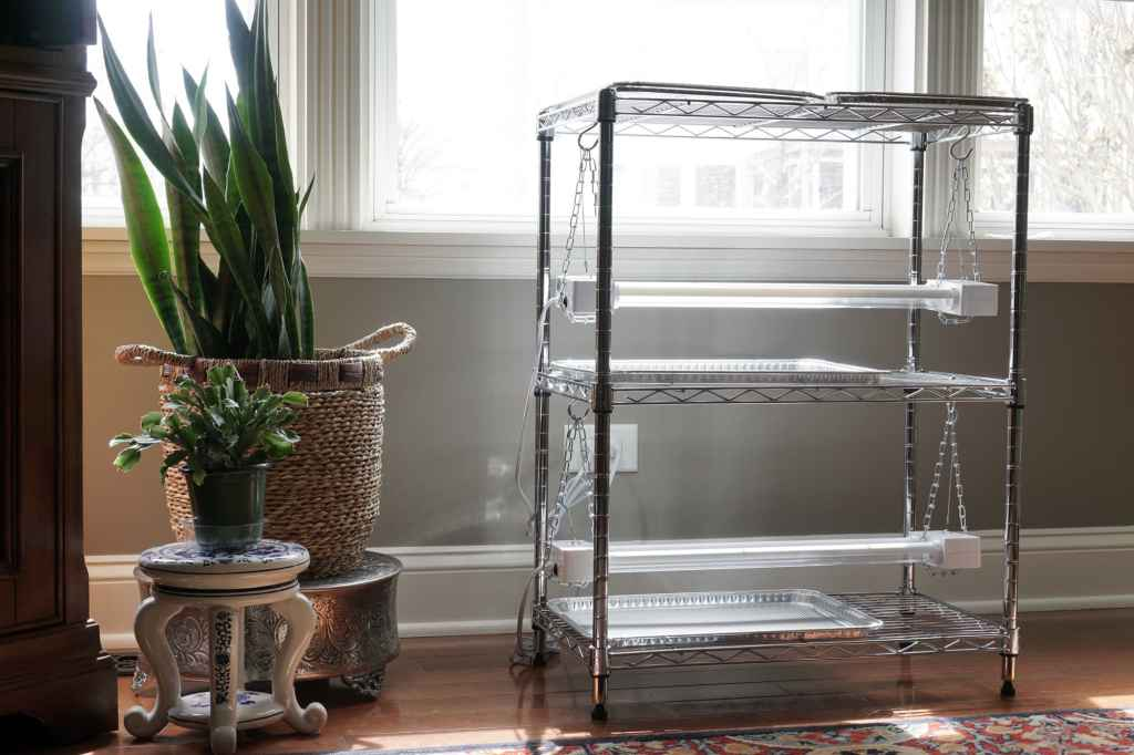 Seed Starting Rack with Houseplants