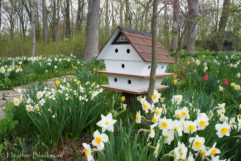 White birdhouse surrounded by daffodils