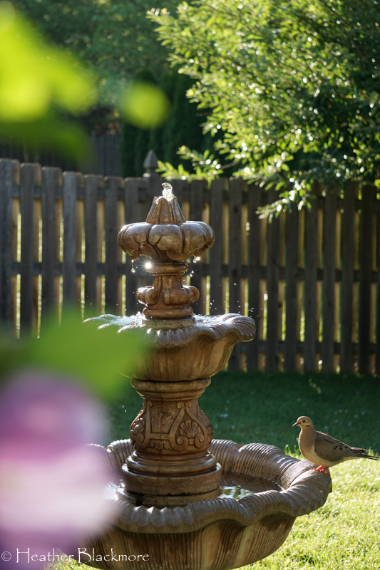 Dove on fountain