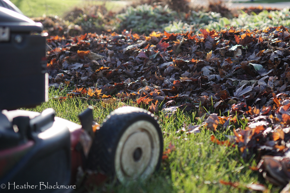 Leaves with mower
