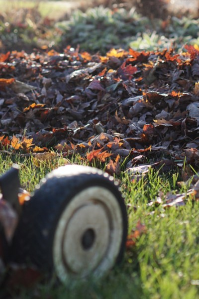 How A Change In Perspective Made Me Thankful For Fallen Leaves