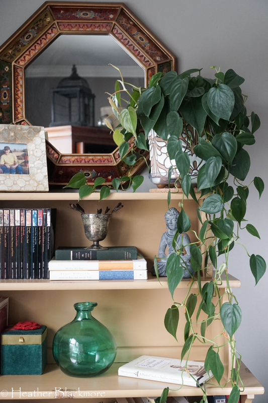 philodendron houseplant