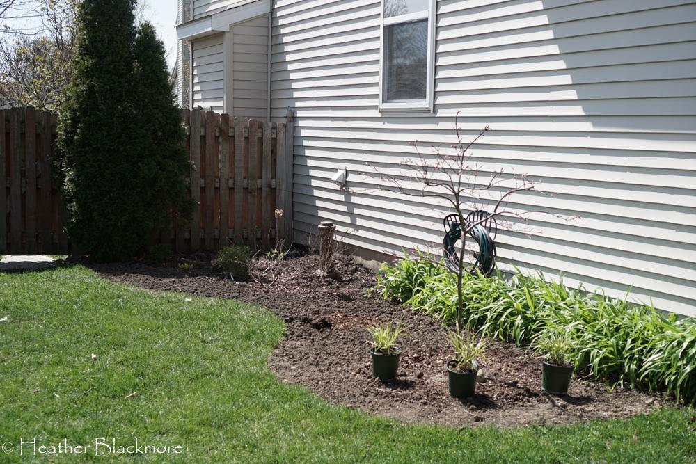 Grass in sideyard is gone