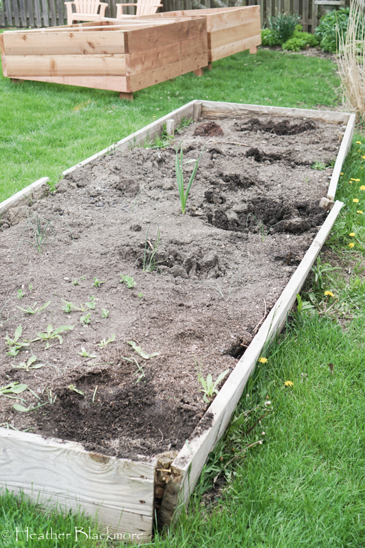 rotting raised bed boards