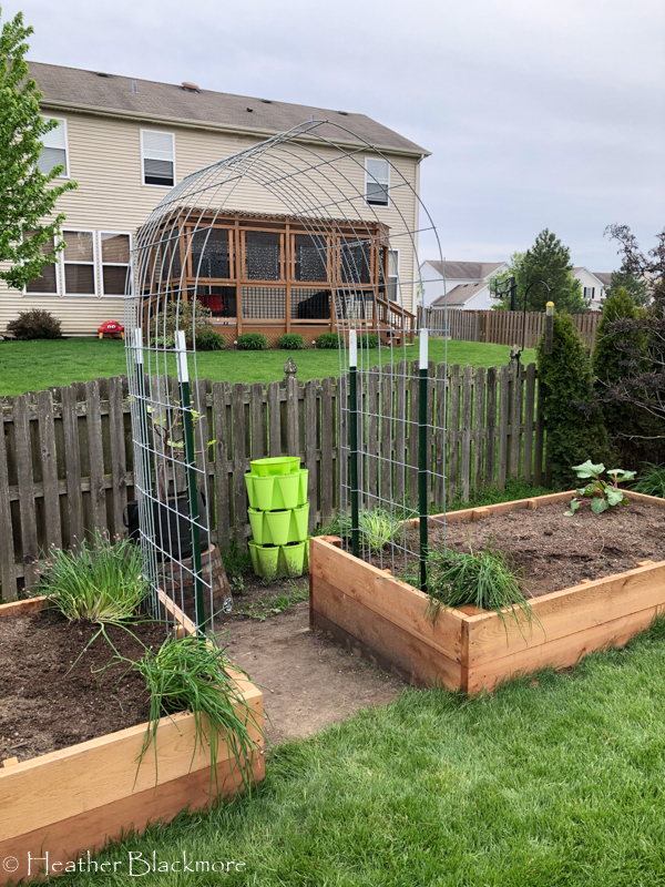raised beds with trellis