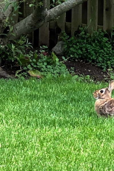 The Owl and the Rabbit – This Isn't a Love Story