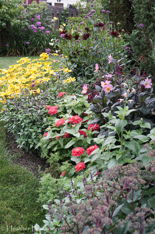 Seed border in bloom