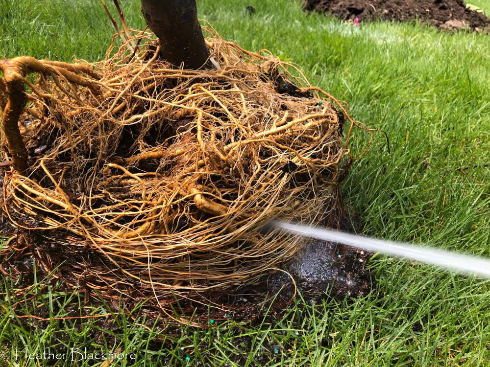 root washing