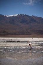 Salt Flat Tour_186