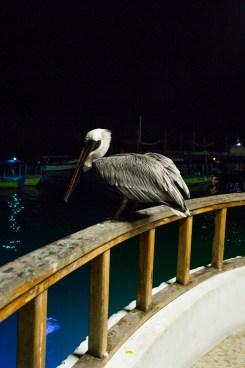 Galapagos_056