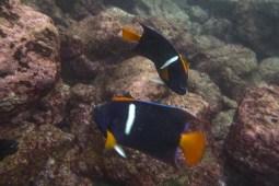 Galapagos_070