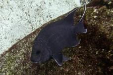 Galapagos_079