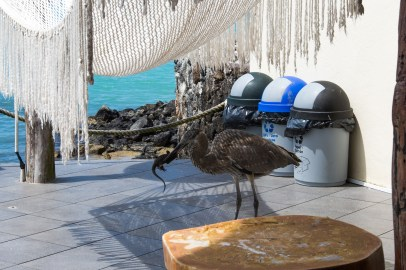 Galapagos_095