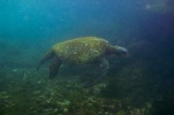 Galapagos_129