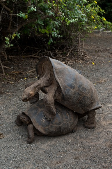 Galapagos_201