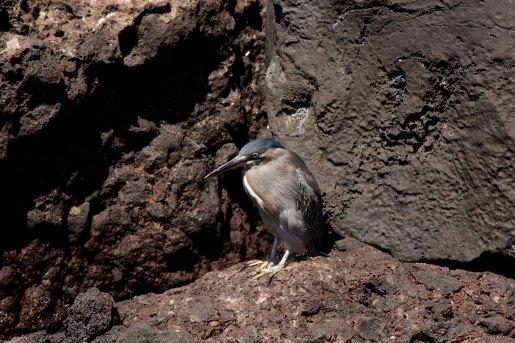Galapagos_356