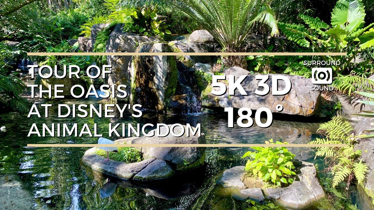 Tour of Oasis at Disney's Animal Kingdom (5K 3D 180°)