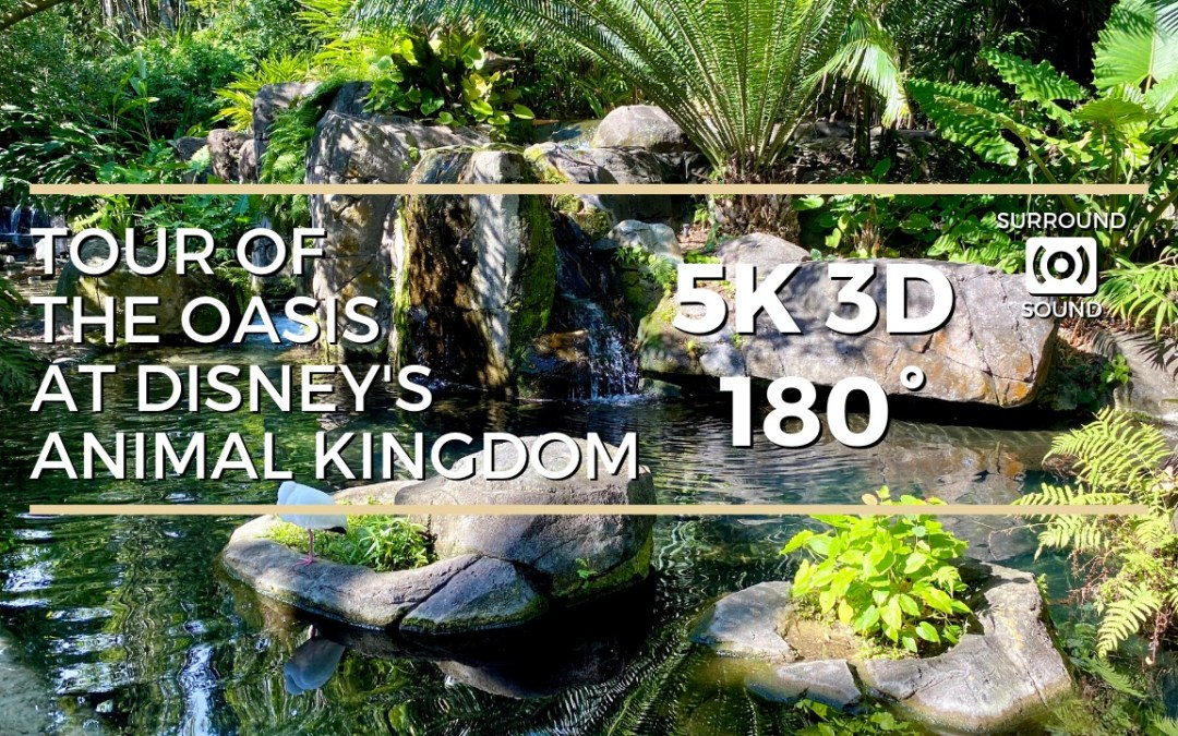 Tour of Oasis at Disney's Animal Kingdom (5K 3D 180°)
