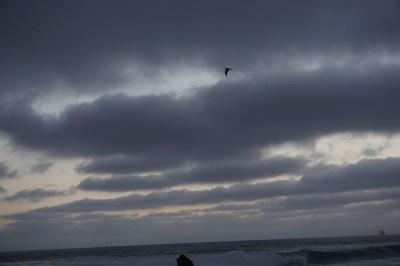 moments black bird cloud and ocean