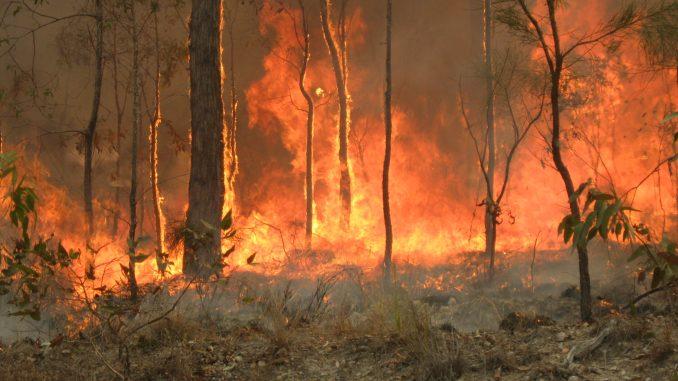 A bush fire in rural Queensland woodlands.