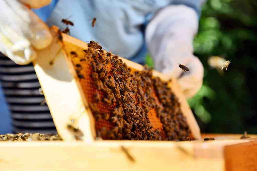 How To Start Beekeeping 1