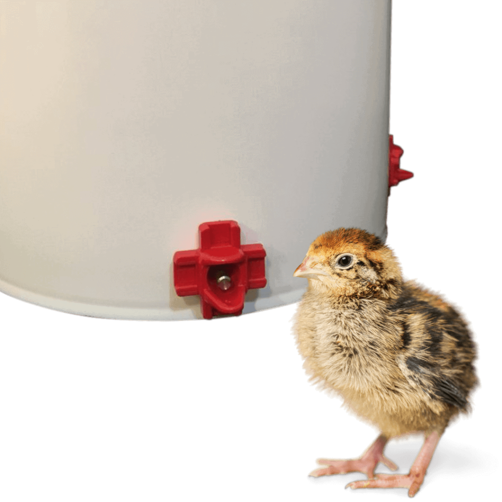 Everything You Wanted To Know About Raising Chickens 5