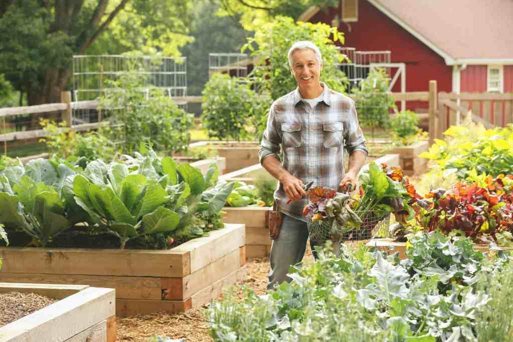 Joe gardener