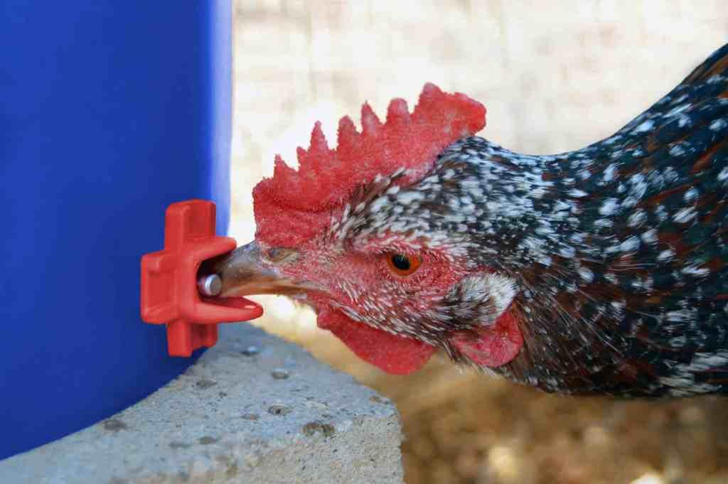5+ FREE DIY Chicken Nipple Waterer Blueprints 1