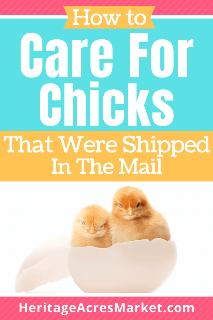 mail order chickens