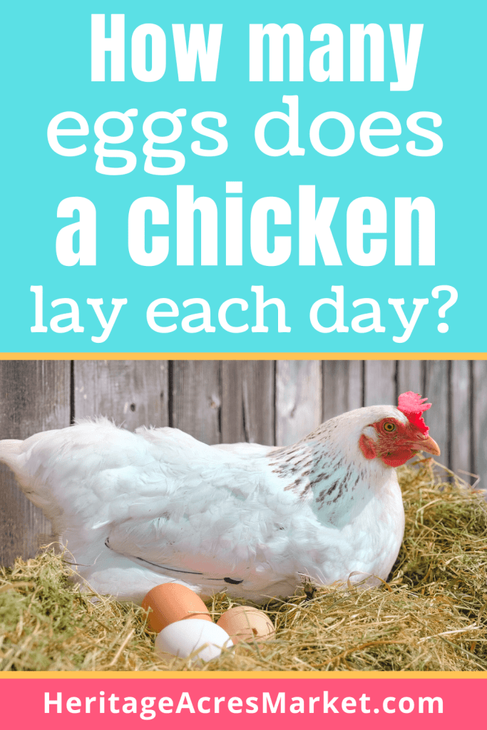 how many eggs does a chicken lay a day