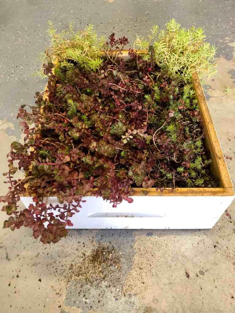 DIY Bee Hive Green Roof 11