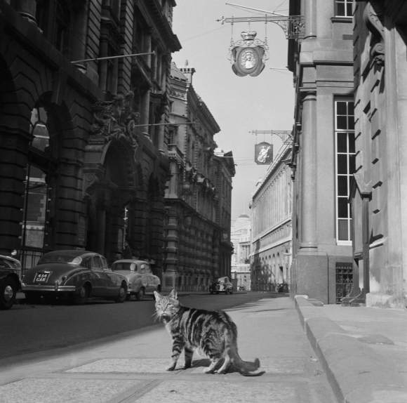 A tabby cat in Lombard Street, City of London