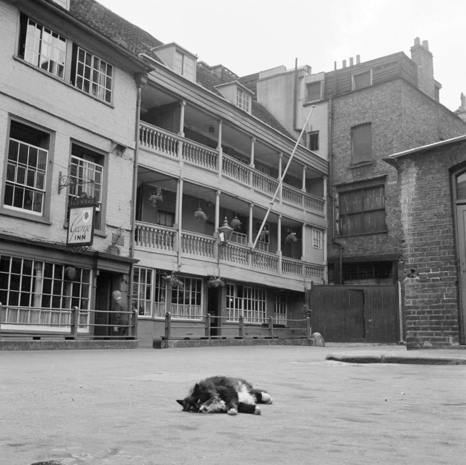 A cat sunbathing in the George Inn Yard in front of the 17th century galleried coaching inn from which the yard takes its name, 1960 - 1969