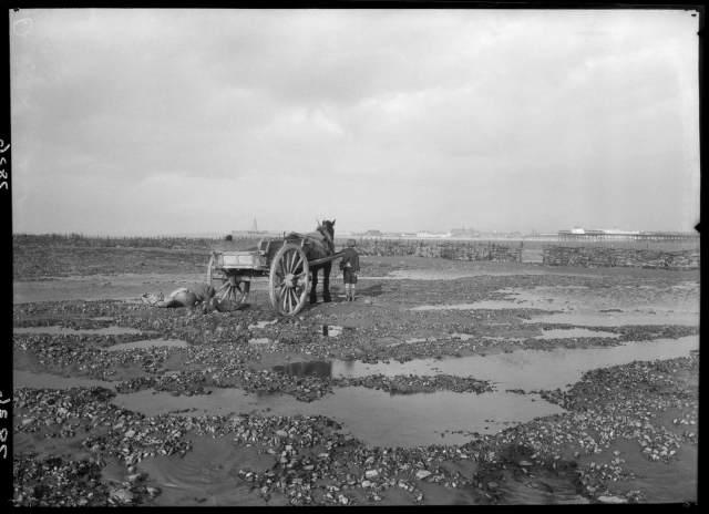 Traditional fishing using horse and cart, Morecambe Bay, Lancashire, 1920-1950 © Historic England Archive WSA01 01 07836