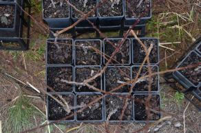 Learn to graft fruit trees3