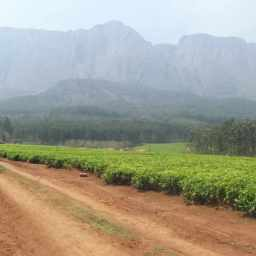 Mulanje Mountain Cultural Landscape