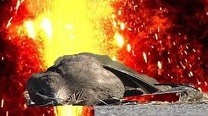 Dead Birds Don't Cry