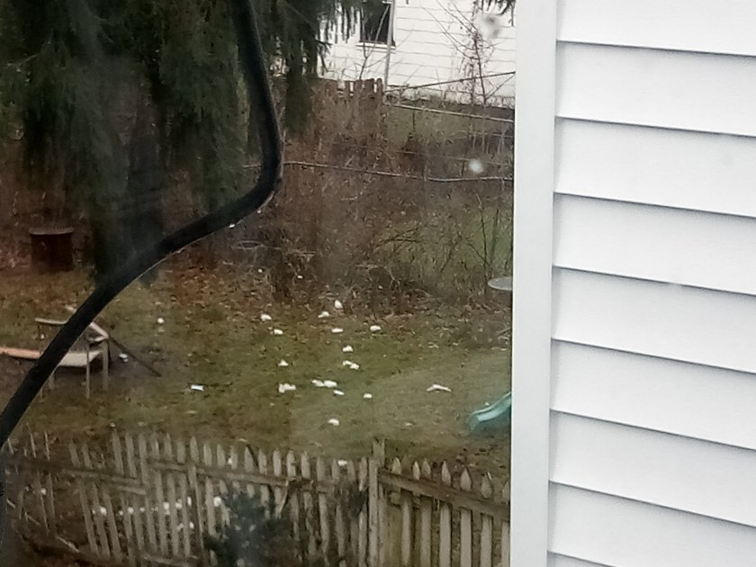 Crystal meth delivery bags littering 326 Pleasant Avenue Herkimer 11/22/17
