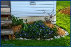 Azalea/Shade Garden