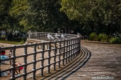 Seagulls sitting on railing on boardwalk