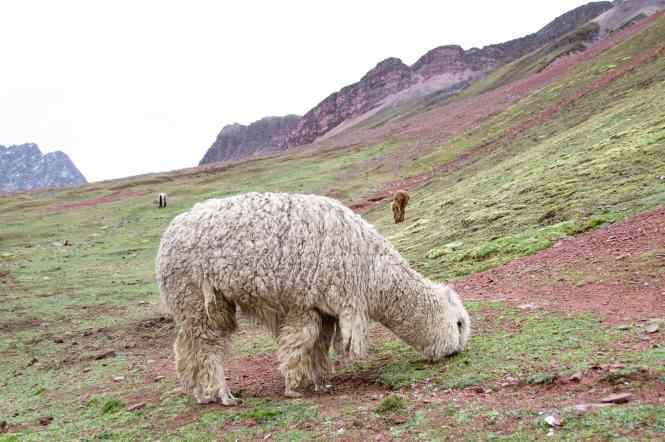 Animals on Rainbow Mountain Hike